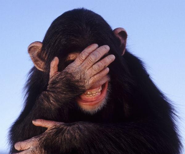 Смеющийся примат